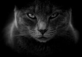 cat-3386220